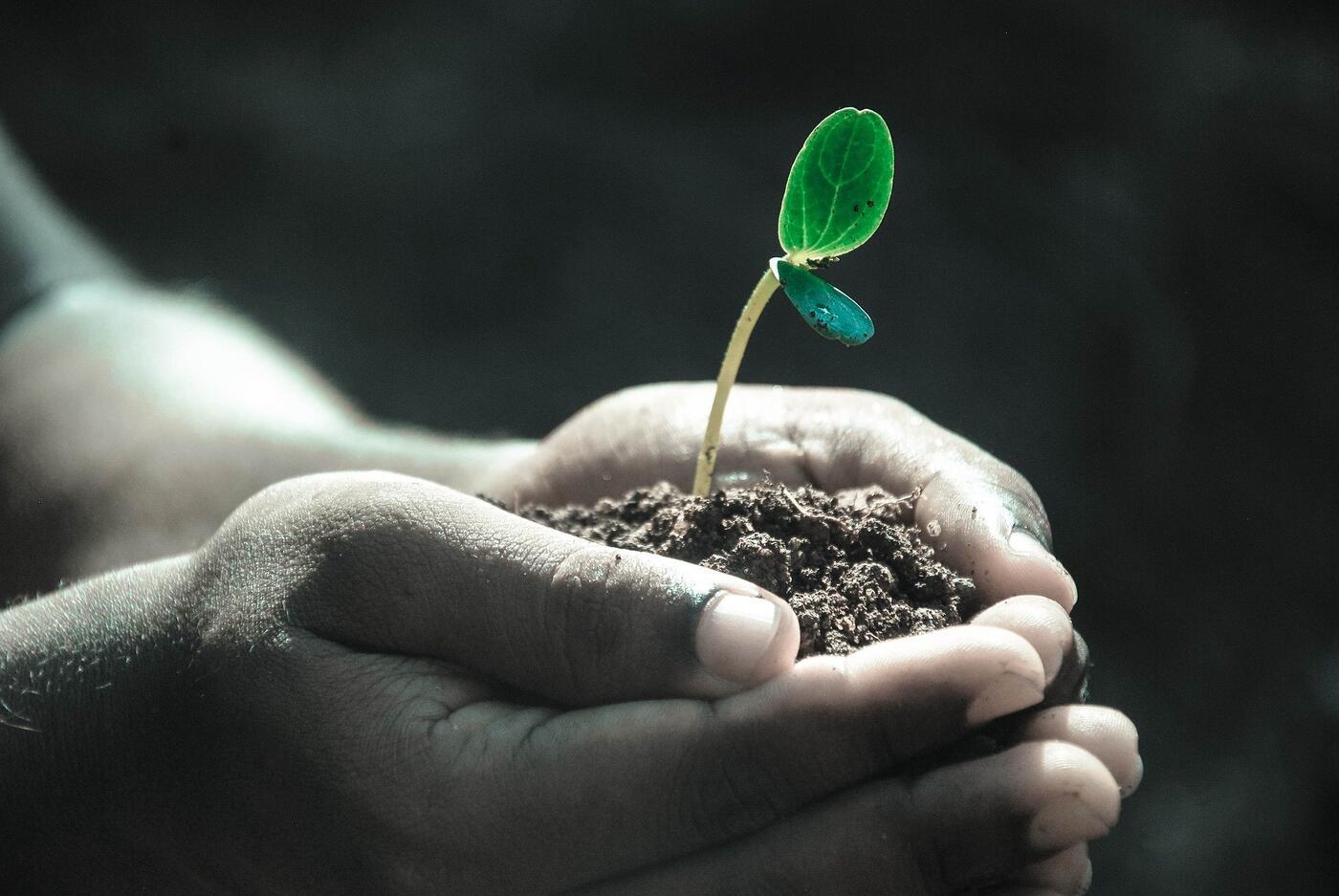 Menschliche Hand mit Erde und einer Pflanze