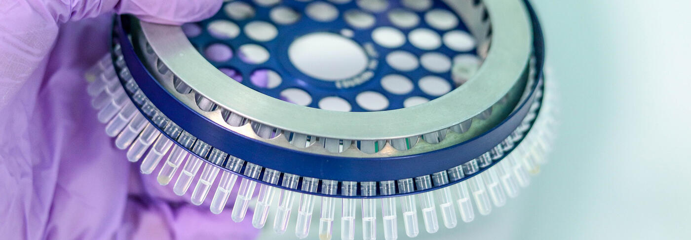 PCR-Röhrchen in großer Anzahl